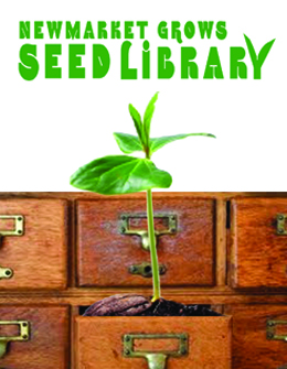 Picture of plant in a library card catalogue with the Newmarket Grows Seed Library logo